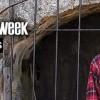 Man of the Week: Tony Vaitsopoulos