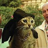 "Movie Review: ""Keanu"" has the potential to become a cult classic thanks to a little kitten"