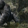 Movie Review: Humans interfere with monster movie 'Kong'